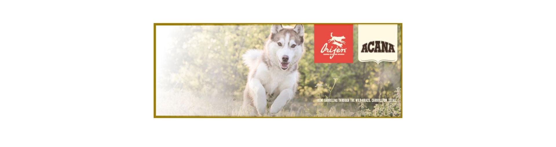 Spartan Animal Kingdom Dog Food